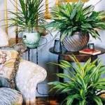 Salon / ofis bitkileri