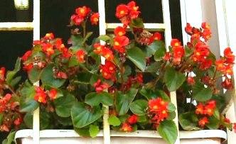 Pencere önünde çiçek yetiştirmek