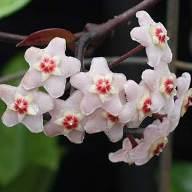 Evleri kokutan çiçekler