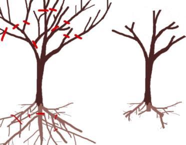 Cüce ağaç oluşturmak için gereken budamalar