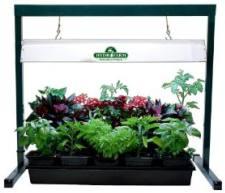 Bitkilere fluoresan ışıklandırma