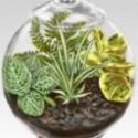 küçük bir kavanozdan terrarium
