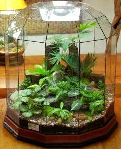 Terrarium içinde bitki yetiştirmek