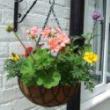 Duvara aplike saksıda çiçekler