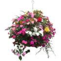 Sarkıcı çiçekli bitkilerden aranjman