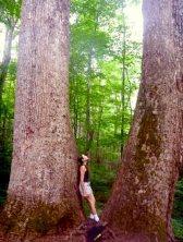Dev lale ağaçları