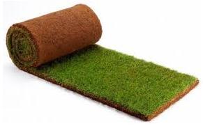 Hazır rulo çim