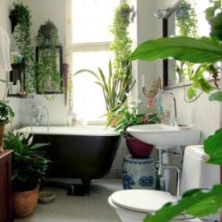 Banyoda bitkiler