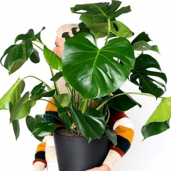 İç mekan süs bitkileri