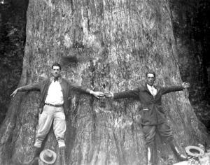 Dünyanın en yaşlı ağaçlarından biri idi