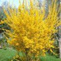 Küçük süs ağacı formunda altın çanak