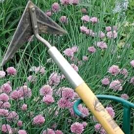 Çapa; bir bahçe aleti