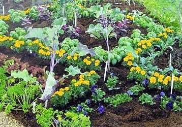 Bahçe uğraşıları basit gibi görünse de iyi bir bilgi ve tecrübe ister.