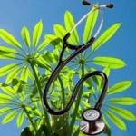 Bitkileri sağlıklı, verimli çoğaltma