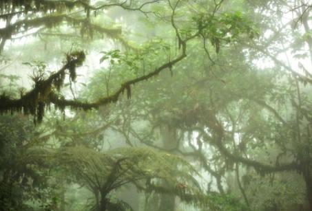 Sis ormanı