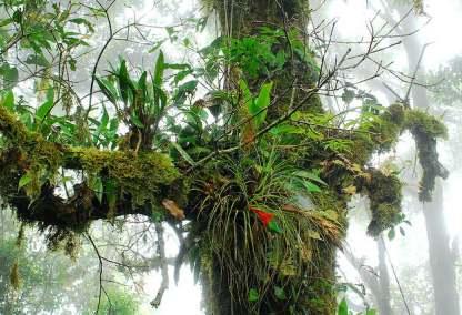 Sis ormanında epifitler