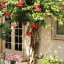 Sürekli çiçek açan küçük süs ağaçları