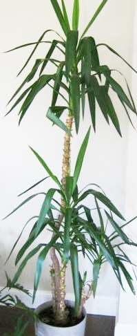 Uzayan yükselen bitkiler