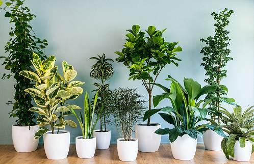 Ofis bitkilerinden bazıları