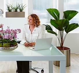 Ofis ortamında bitkiler