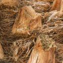 Palmiye liflerinin orkide vb bitkilerde kullanımı